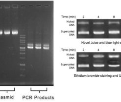 Non-Toxic-DNA-Staining