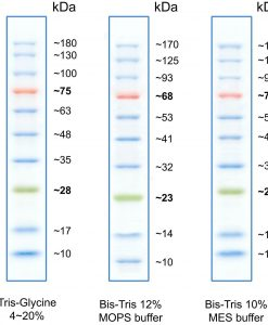 tri-color-prestained-protein-ladder-marker