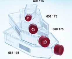 Greiner-T-25-Cell-Culture-Flask
